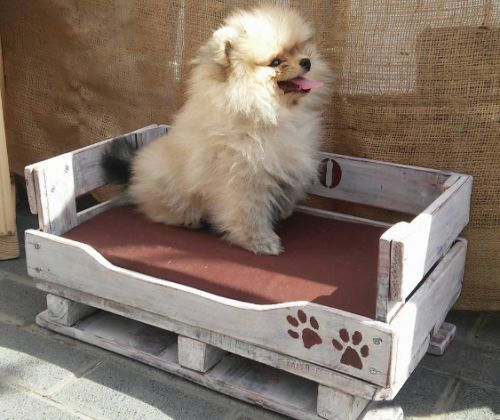 Special Dog Beds